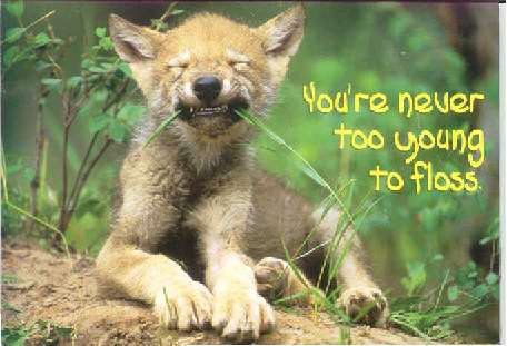 go floss yourself